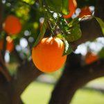 """Der Vertrieb einer """"OrangenRente"""" der Agri Terra wurde untersagt."""