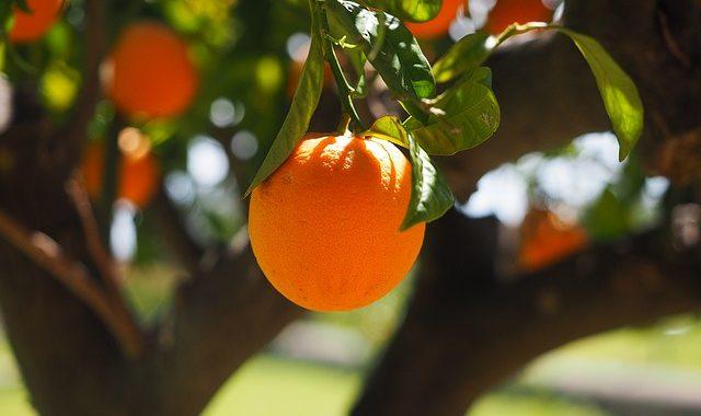 """Bafin verbietet den Vertrieb der """"Orangen-Rente"""""""