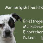 Tierhalterhaftpflicht- und Hausrat