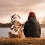 OP-Kosten für Hunde liegen bei fast der Hälfte der Befragten bei über 500 Euro