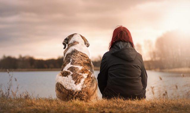 Kostenfaktor Tierarzt – 26 Prozent der deutschen Hundehalter fürchten finanzielle Schwierigkeiten