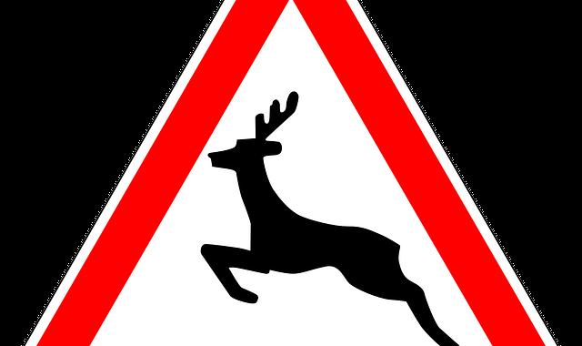 Achtung, Wildwechsel! Wie Autofahrer bei Tieren auf der Straße reagieren sollten