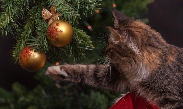 Brandgefahr zur Adventszeit deutlich erhöht