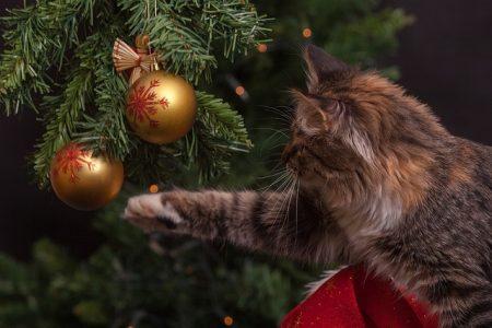 Vorsicht Brandgefahr: Das müssen Sie in der Weihnachtszeit beachten
