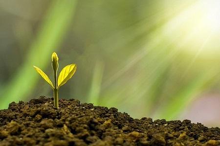 Gothaer bAV Selfservice nutzen, Bäume pflanzen