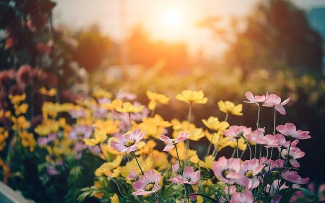 Smart Gardening – gut wenns dem Naturschutz dient